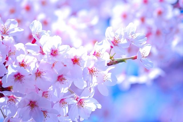 春は出会いと別れの季節